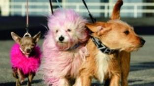 I cagnolini e la lebbra