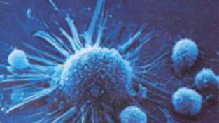 Storia di una cellula