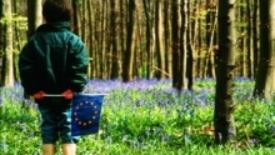 """Ahern e Prodi """"Non seminare erba, ma alberi"""""""