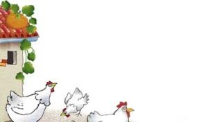 Emergenza nel pollaio