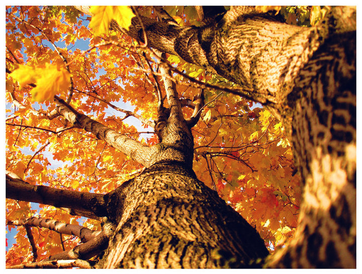 alberi autunno