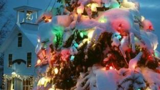 Grazie per l'albero di Natale