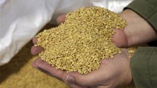 Se il grano aumenta più dell'oro