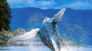 Blue Whale, tra bufale e pericoli reali