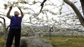 Ripartire da Fukushima