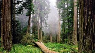 Salviamo le foreste