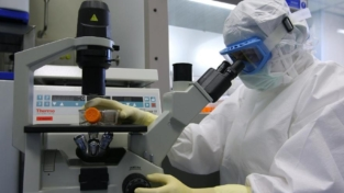Con le cellule staminali manipolate, i genitori possono donare il midollo ai figli