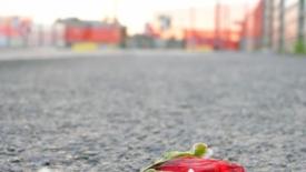 Accogliere senza pregiudizi le vittime di violenza