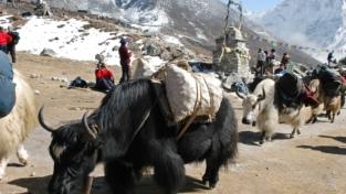 Valle del Khumbu (Nepal)