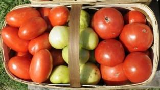 Più pomodori in tavola