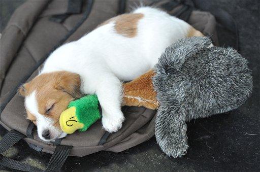 Cani ad una mostra canina in Austria