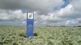 L'industria sarda si tinge di verde