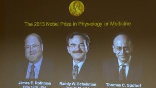 La medicina a Rothman, Schekman e Sudhof