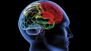 Uomini e donne: anche il cervello funziona diversamente?