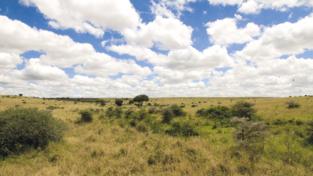 Il cielo sopra Nairobi