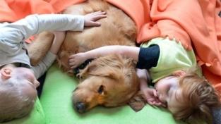 Con il proprio cane vicino si riposa meglio