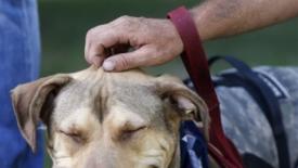 Cani, nuove norme di igiene pubblica