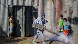 La risposta globale al virus Zika