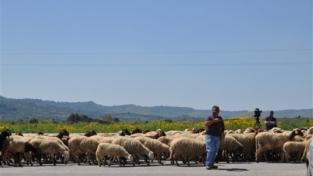 David e Golia in Sardegna