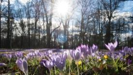 Innamorarsi in primavera