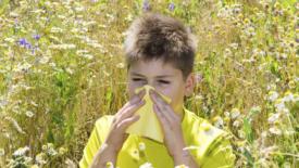 Allergie, ne soffrono 3 italiani su 10