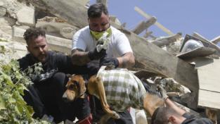 Gli animali sentono prima il terremoto?