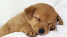 La displasia d'anca nei cuccioli