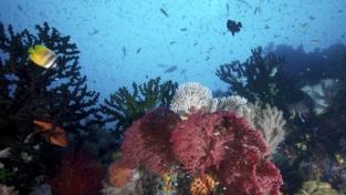 Australia. Allarme dell'Unesco: «Muore la barriera corallina»