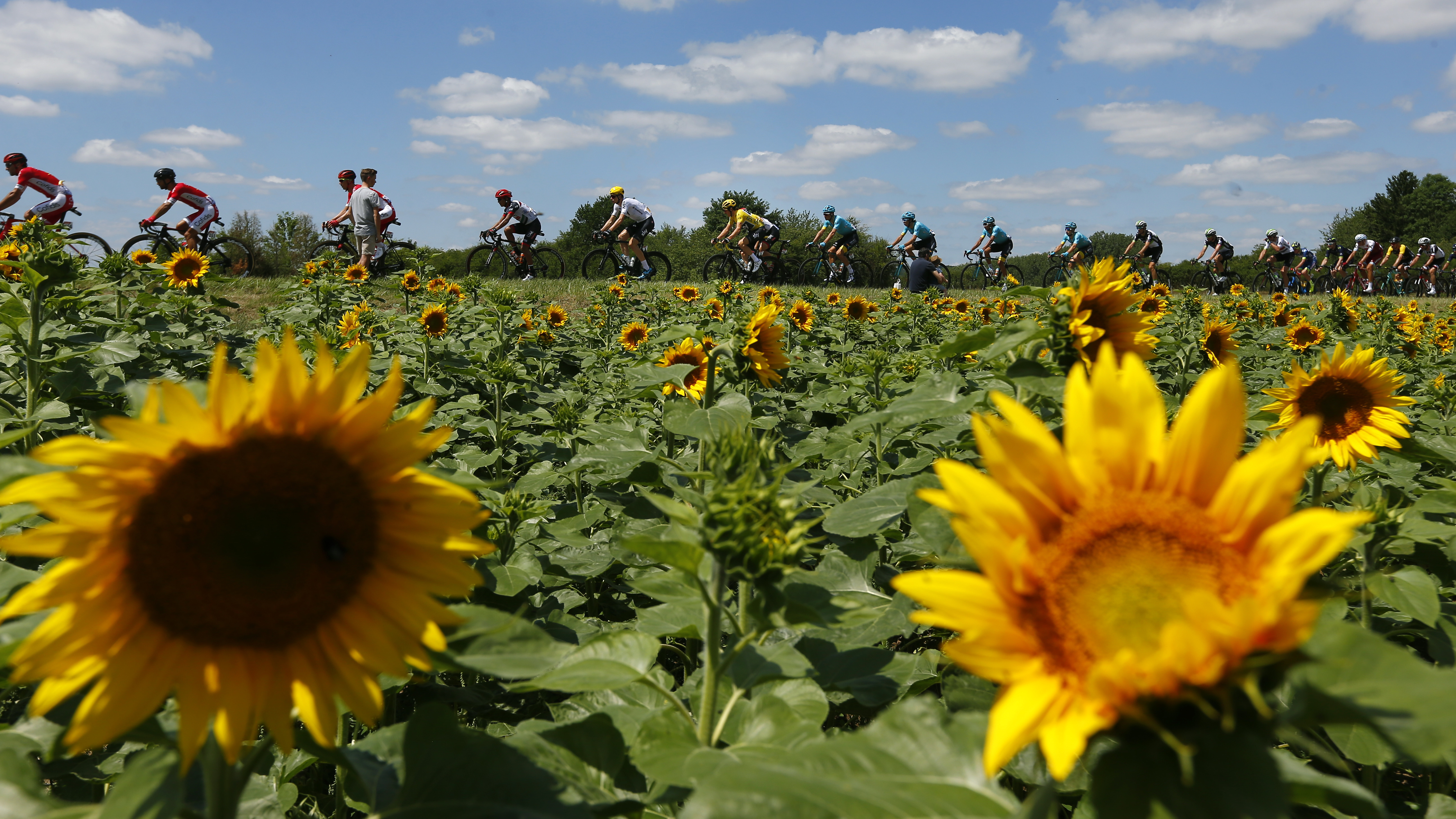 The pack with Britain's Geraint Thomas, wearing the overall leader's yellow jersey, center, passes a field of sunflowers during the fourth stage of the Tour de France cycling race over 207.5 kilometers (129 miles) with start in Mondorf-les-Bains, Luxembourg, and finish in Vittel, France, Tuesday, July 4, 2017. (AP Photo/Peter Dejong)