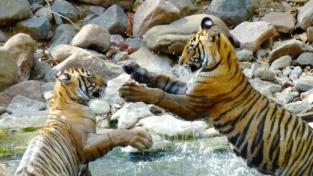 Animali selvaggi dell'India
