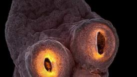 Bellezze da microscopio