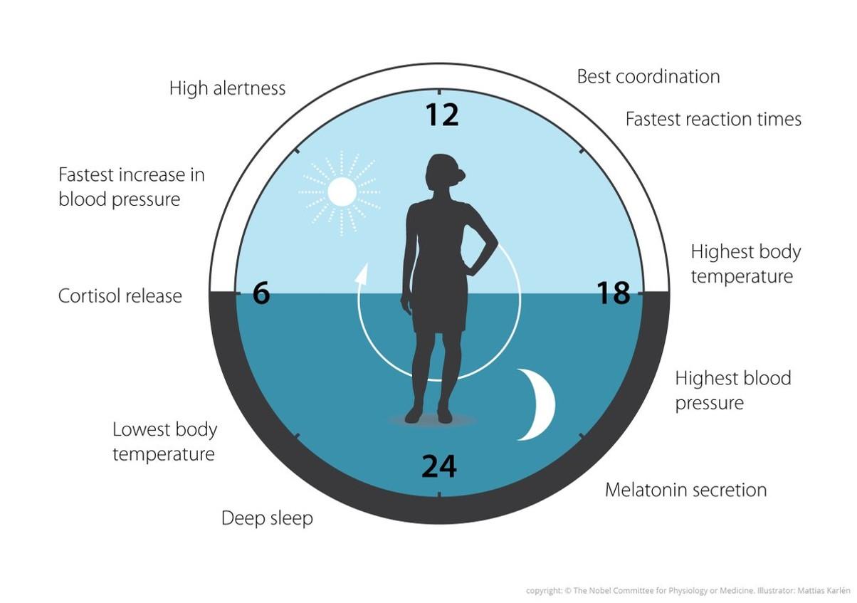 nobel-medicina-ritmo-circadiano