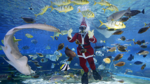 A diver dressed in a Santa costume, feeds grouper, stingrays, sharks and other fish at the Manila Ocean Park, the country's largest oceanarium, Friday, Dec. 15, 2017 in Manila, Philippines. With a few days left before Christmas, various malls and other business establishments come up with their own way of attracting patrons such as bazaars, Christmas displays and even free concerts. (AP Photo/Bullit Marquez)