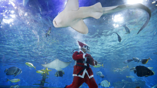 A diver dressed in a Santa costume feeds grouper, stingrays, sharks and other fish at the Manila Ocean Park, the country's largest oceanarium, Friday, Dec. 15, 2017 in Manila, Philippines. With a few days left before Christmas, various malls and other business establishments come up with their own way of attracting patrons such as bazaars, Christmas displays and even free concerts. (AP Photo/Bullit Marquez)