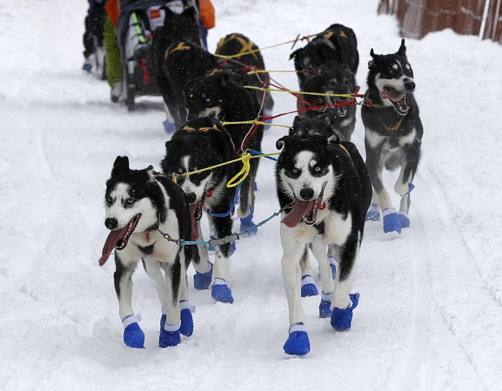 Iditarod Trail Sled Dog Race in Alaska