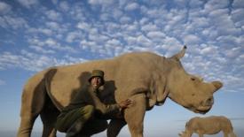 Quando avranno abbattuto l'ultimo rinoceronte
