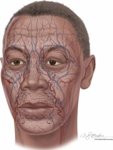 Vasi sanguigni facciali (Ohio State University)