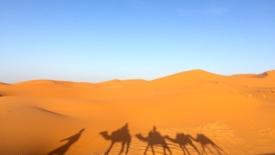 Tornare nel deserto