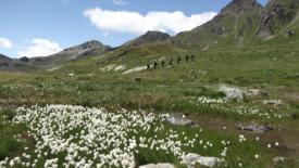 Scrittura in cammino e montagnaterapia