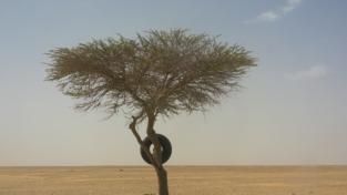 Se il Sahara diventa verde