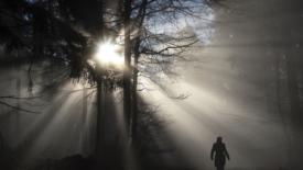 Avrete la luce della vita