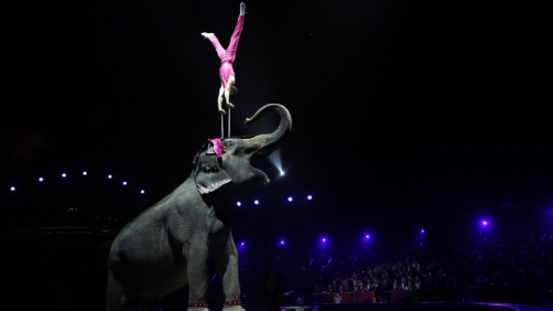 epa07294685 Joy Gartner Family member and his elephant performs during the opening ceremony of the 43rd Monte-Carlo International Circus Festival in Monaco, 17 January 2019. The festival runs from 17 to 27 January.  EPA/SEBASTIEN NOGIER / POOL