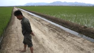 Carestia in Corea del Nord