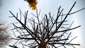 L'Albero degli alberi
