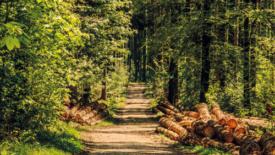 Foreste, patrimonio italiano