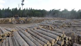 180 milioni di alberi per l'Amazzonia