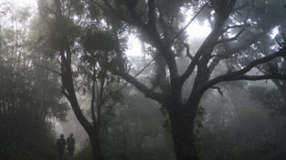 I tre pilastri dell'Amazzonia