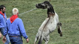Cavalli selvaggi in Europa