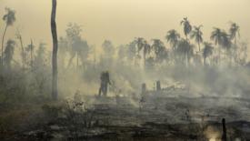 Sinodo Amazzonia, grido della Terra e dei poveri