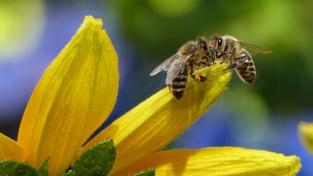Le capacità matematiche delle api